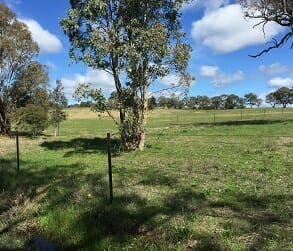 Image for Bungendore Landcare